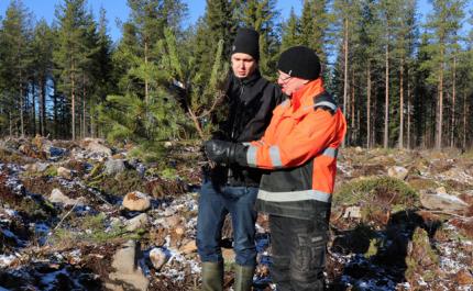 Metsänomistaja Juho Yli-Kaatiala ja kehittämisasiantuntija Heikki Kuoppala Metsäkeskuksesta katselevat hirvien syömää mäntyä.