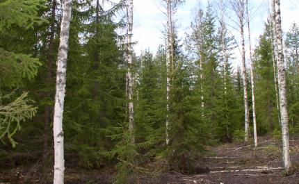 Metsänomistaja – näin varaudut muuttuvaan ilmastoon