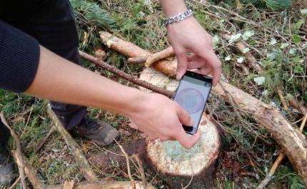 Kuvassa kädet ojentuvat ottamaan älypuhelimella kuvaa kannosta, joka on käsitelty juurikäävän torjunta-aineella. Kannossa on sinertävää väriä, jota lisätään torjunta-aineeseen. Ympärillä maassa on havupuun oksia.