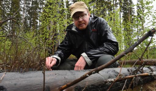 Jarmo Uimonen katselee palanutta puunrunkoa paikalla, jossa tehtiin kulotus seitsemän vuotta takaperin.