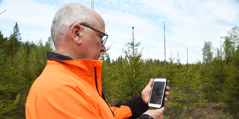 Jyrki Suojalehto katsoo älypuhelintaan, johon on ladattu Laatumetsä-sovellus. Taustalla on taimikkoa.