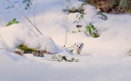 Talvinen metsä on kuin vieraskirja