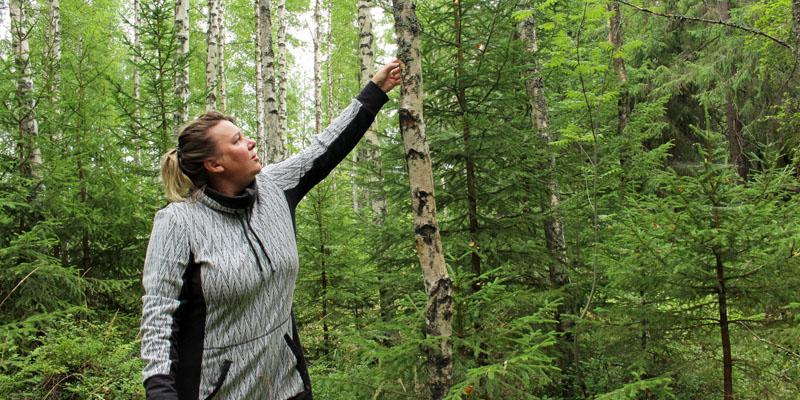 Matkailuyrittäjä Matleena Pulkkinen tunnustelee metsässä kädellään, onko koivun runkoon kasvanut pakurin alkuja.