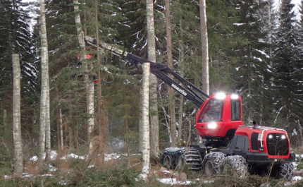 Metsäkone katkoo koivuista tekopökkelöitä.