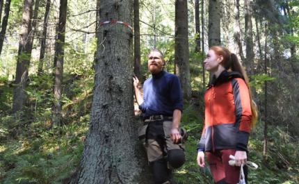 Mika Hämäläinen ja Inna Salminen katselevat metsässä kuitunauhalla merkittyä puuta, jonka juurelta havaittiin liito-oravan jätöksiä muutamia vuosia sitten.