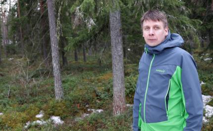 Laskelmilla on käyttöä metsätaloudessa
