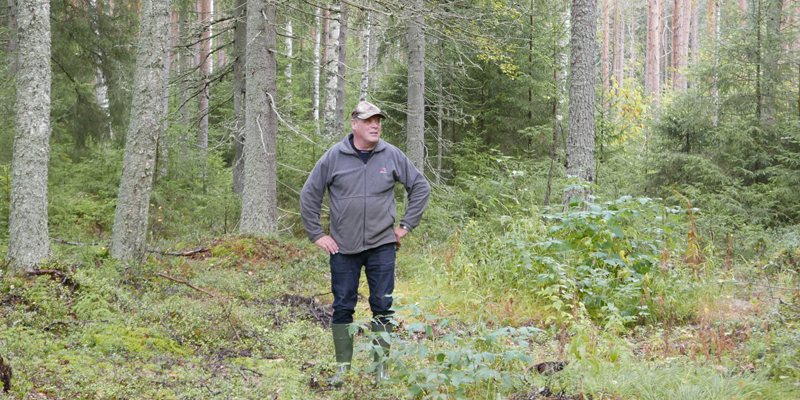 Seppo Helminen seisoo kuvan keskellä. Ympärillä on hänen omistamaansa metsää.