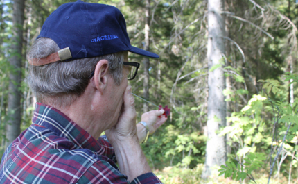 Metsänomistaja, opettele ainakin nämä kolme mittausta