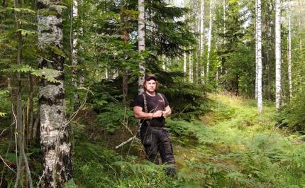 Metsän luontoarvoja voi parantaa pienillä teoilla