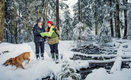 Metsän suojelusta korvausta