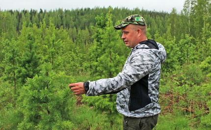 Taimikon varhaishoito on metsänomistajalle kannattava työ