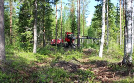 Kuvassa hakkuukone harventaa metsää väyläharvennuksena.