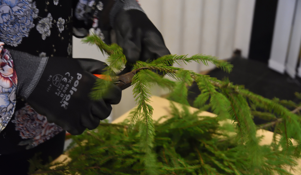 Lähikuva oksasaksista, joilla leikataan kuusenoksista pieniä havuja.