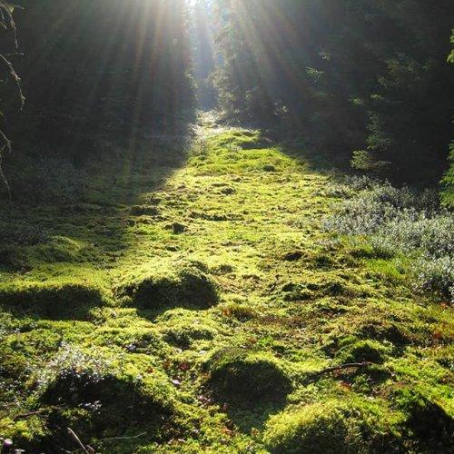 @metsakeskus: Hyvää maailman metsäpäivää! Metsässä on tilaa jokaiselle. 🌲☀️ Glad världsskogsdag! I skogen finns det rum för alla.  #maailmanmetsäpäivä #världsskogsdag #internationaldayofforests
