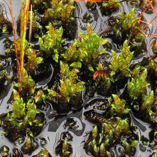 Letot ovat soista monimuotoisimpia ja harvinaisimpia. Siinä missä lehdot ovat metsäluonnon lajistollisia aarreaittoja, o...