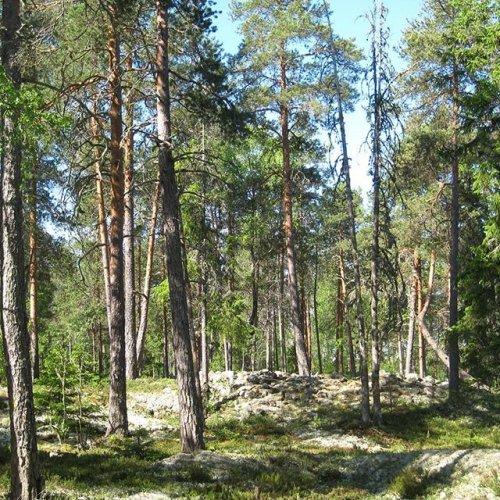@metsakeskus: Hyvää luonnon monimuotoisuusviikkoa! METSO-suojelun avulla voit turvata rakkaan metsäsi säilymisen tuleville sukupolville. METSO-ohjelmalla on varmistettu myös monen retkeilyyn ja virkistykseen käytetyn kohteen säilyminen.  Metsien monimuotoisuuden suojelu hyödyttää kaikkia: METSOn avulla voidaan suojella merkittäviä luontotyyppejä, lajeja ja myös virkistyskäytön kannalta tärkeitä luontoarvoja. METSO-kohteilla on runsaasti lahopuuta ja niillä esiintyy uhanalaisia lajeja ja -luontotyyppejä.  Monimuotoisuus edistää myös metsien ja metsäluonnon sopeutumista ilmastonmuutokseen. Suojelumetsät ovat pysyviä puuston ja maaperän hiilivarastoja.  Lue lisää metsien suojelusta 👉 metsakeskus.fi/suojelu