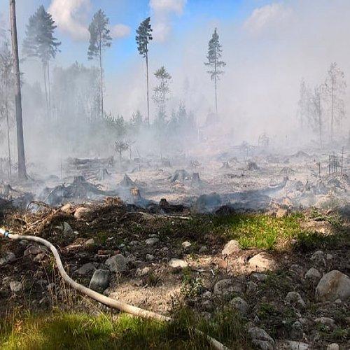 @metsakeskus: Luonnonhoitohankkeiden haku on auki! Vuoden ensimmäisessä hankehaussa on mukana 13 hanketta, joista valtaosa on monimuotoisuutta edistäviä metsien kulotuksia. 🔥 Metsäkeskuksen luonnonhoitohankkeita voivat hakea toimijat, jotka ovat valmiita ottamaan kokonaisvastuun töiden suunnittelusta ja toteutuksesta. ➡️ metsakeskus.fi/luonnonhoitohankkeet #luonnonhoito #kemera #hankehaku