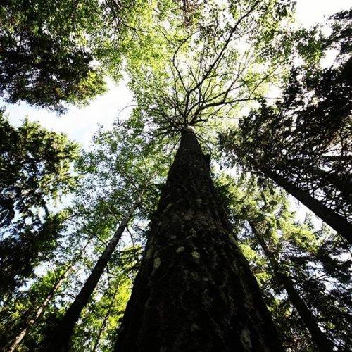@metsakeskus: Meillä Metsäkeskuksessa on nyt paljon työpaikkoja auki. Haemme muun muassa kesäharjoittelijoita, projektihenkilöstöä ja metsäneuvojia eri puolille Suomea. Tulisitko meille hommiin? Tsekkaa verkkosivuillamme ➡️ metsakeskus.fi/avoimet-tyopaikat  #rekry #metsäkeskus #metsäala #metsähommat #hankehommat #kesähommat ☀️