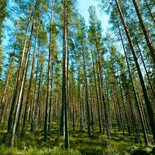 🌲 Kuolinpesien metsänomistus on vähentynyt viime vuosina. 🌲  Metsäkeskuksessa on selvitetty yksityismetsien omistusta....