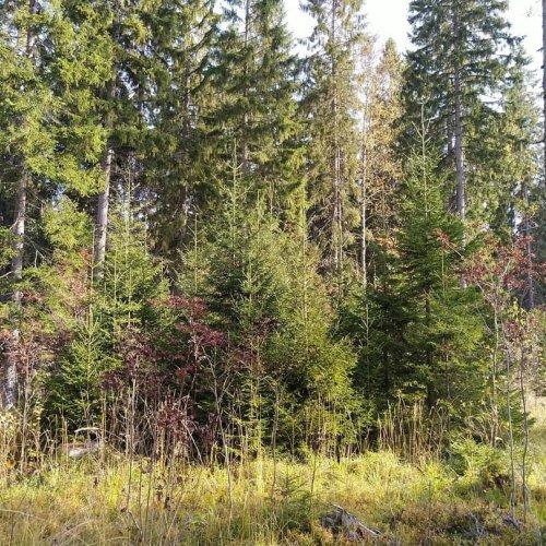 Askarruttaako jatkuva kasvatus? Tukeeko se metsänomistukselle asettamiasi tavoitteita? Tule ottamaan asiasta selvää - os...