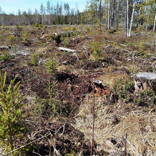 Kysy Metsäkeskuksen asiantuntijoilta metsänuudistamisesta torstaina 29.4. klo 17.30–19.30!  Metsänuudistamisen tavoittee...