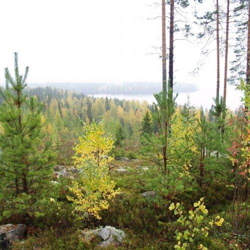 Kaipaatko perustietoa metsänomistuksesta ja metsänhoidosta?Tule mukaan Metsään-peruskurssille!  2.11. starttaava Metsään...