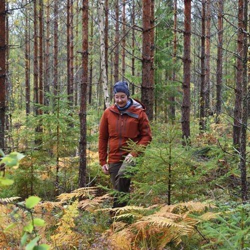 Onko metsään päässyt kertymään hoitorästejä? Tilanne on tuttu monelle metsänomistajalle. Marika Hänninen pallotteli eril...
