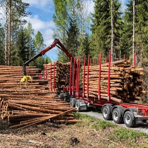 Väyläharvennusta on testattu jo muutamissa metsissä eri puolilla Suomea. Millainen menetelmä oikein on kyseessä ja miten...