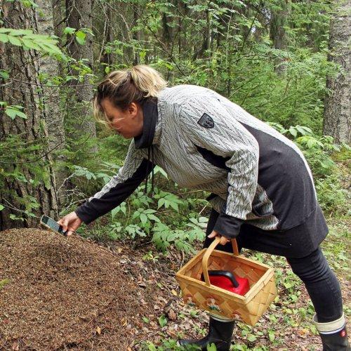 Lähes kaikki Suomen metsät olisivat hyödynnettävissä luomukeruualueina sertifioinnin jälkeen. Metsänomistajalle luomu ta...