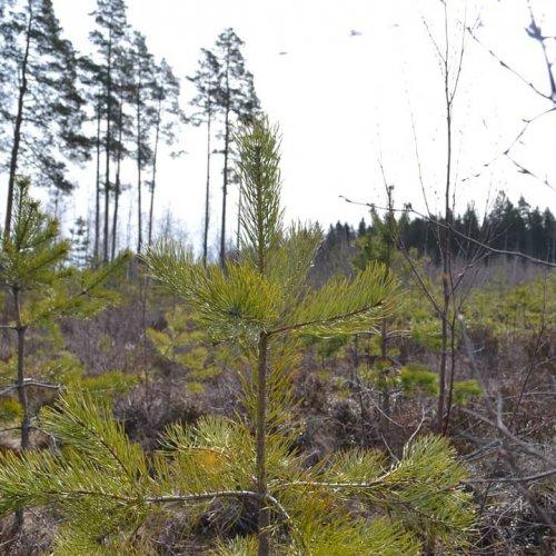 Mihin yhteismetsän suosio perustuu? Paljonko metsää tulisi olla, että yhteismetsän perustaminen olisi järkevää? Näihin j...