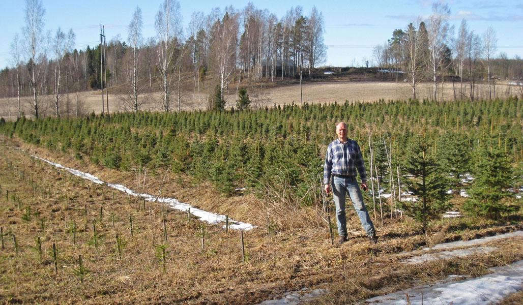 Kuvassa etualalla on Antti Heikkilä. Taustalla on joulukuusiviljelmä, joka on perustettu pellolle.