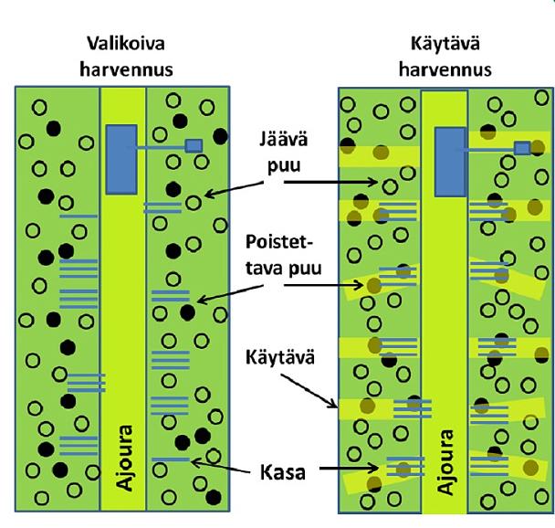 Grafiikka kuvaa valikoivan harvennuksen ja käytävä- eli väyläharvennuksen eroja. Grafiikassa on kuvattu hakkuukoneen ajoura ja sen ympäriltä poistettavat ja jäävät puut sekä puukasat molemmilla harvennusmenetelmillä.