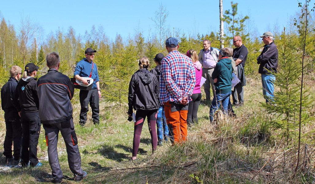 Yli kymmenen hengen ryhmä kuusenkerkkien kerääjiä on kokoontunut rinkiin Arto Pulkkisen ympärille kuulemaan ohjeita. Taustalla on taimikkoa.