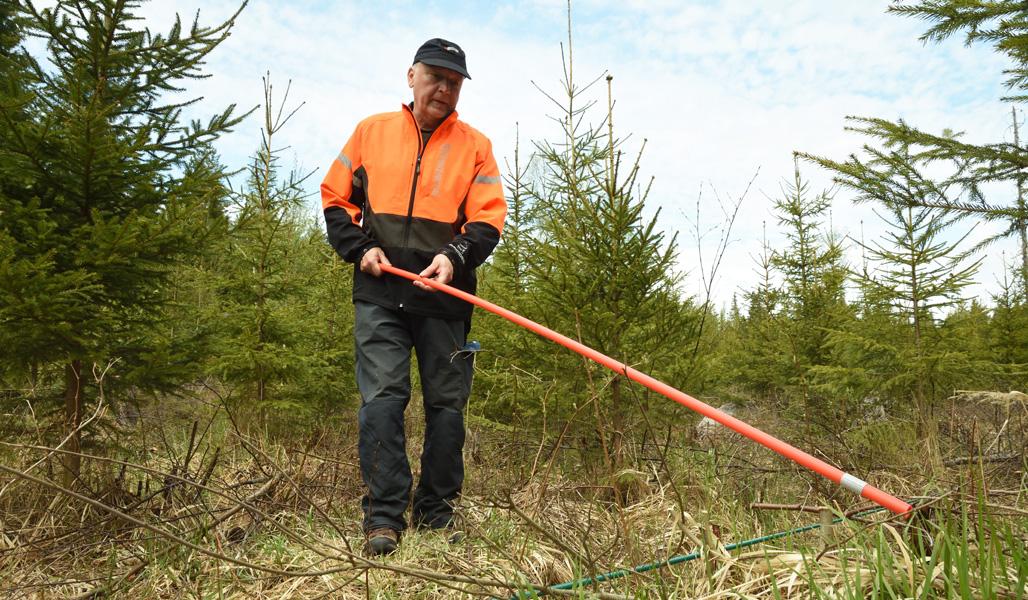 Metsänomistaja Jyrki Suojalehto mittaa aurausviitan avulla poistettujen puiden määrää taimikossa.