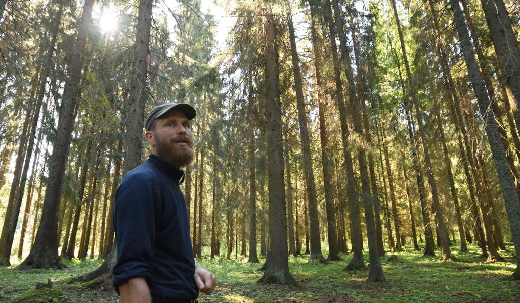 Mika Hämäläinen omassa metsässään. Auringonvaloa näkyy kuusten välistä.