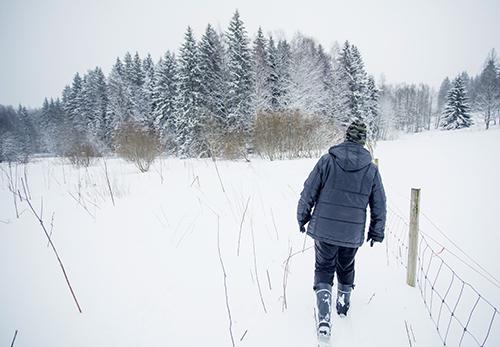 Virpi Saarela kävelee lammaslaitauksen reunaa kohti edessä olevaa metsikköä. Maassa on paljon lunta.