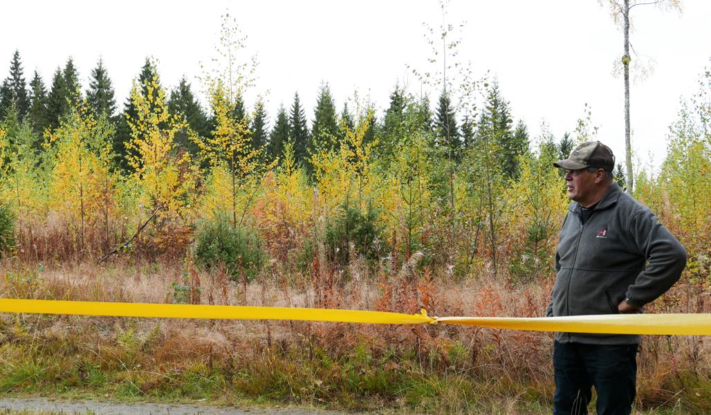 Seppo Helminen katselee taimikkoaan. Hänen vieressään on keltaista nauhaa, jonka tarkoitus on karkottaa hirviä.
