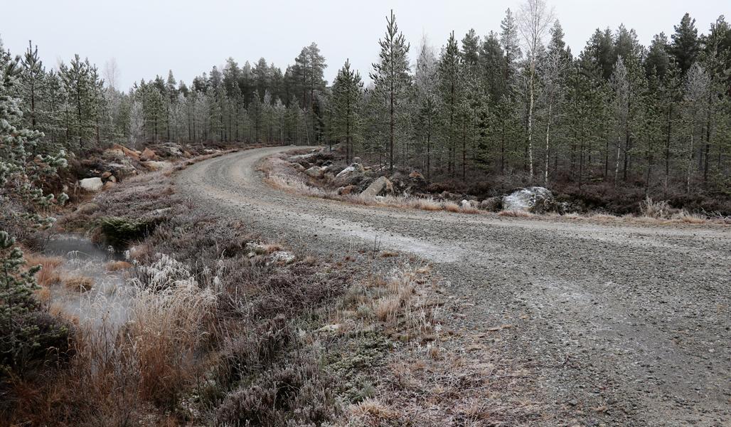 Kuvassa on mutkainen soratie, jonka ympärillä on metsää.