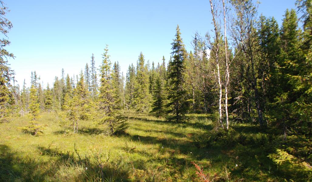 Suon ja metsän välistä aluetta kesällä.
