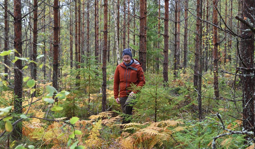 Marika Hänninen kävelee harvennetussa metsässä.