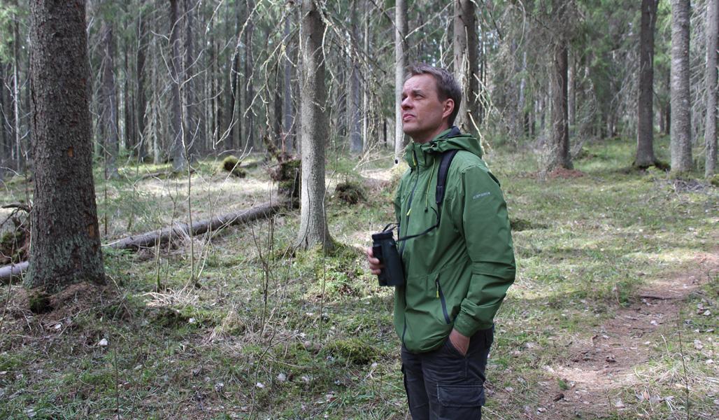 Luonnonhoidon asiantuntija Jukka Ruutiainen tarkkailee metsää kiikarit kädessään.