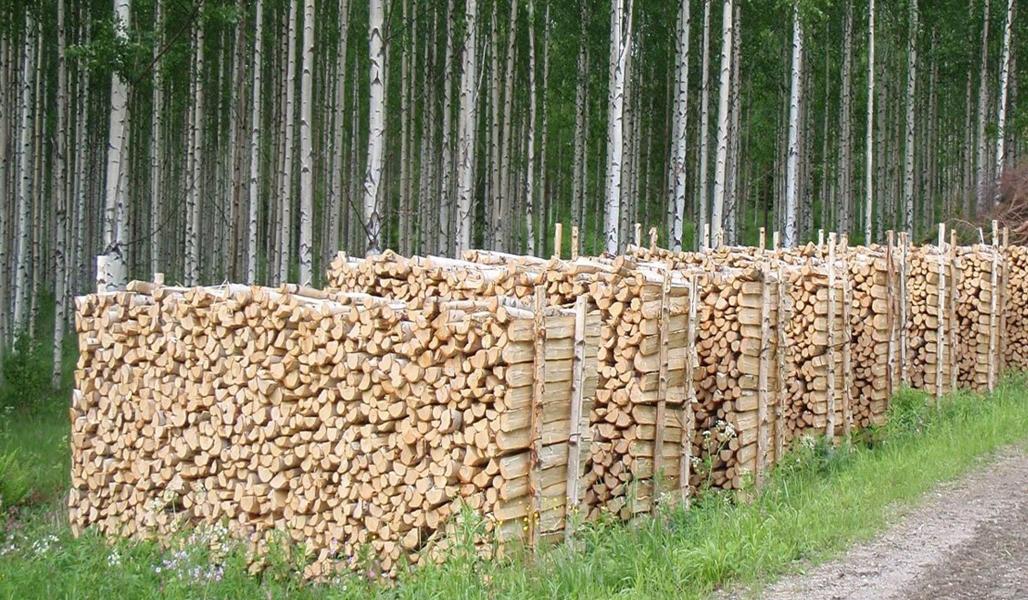Polttopuut kuivuvat hyvin katetussa varastossa tai pinossa.