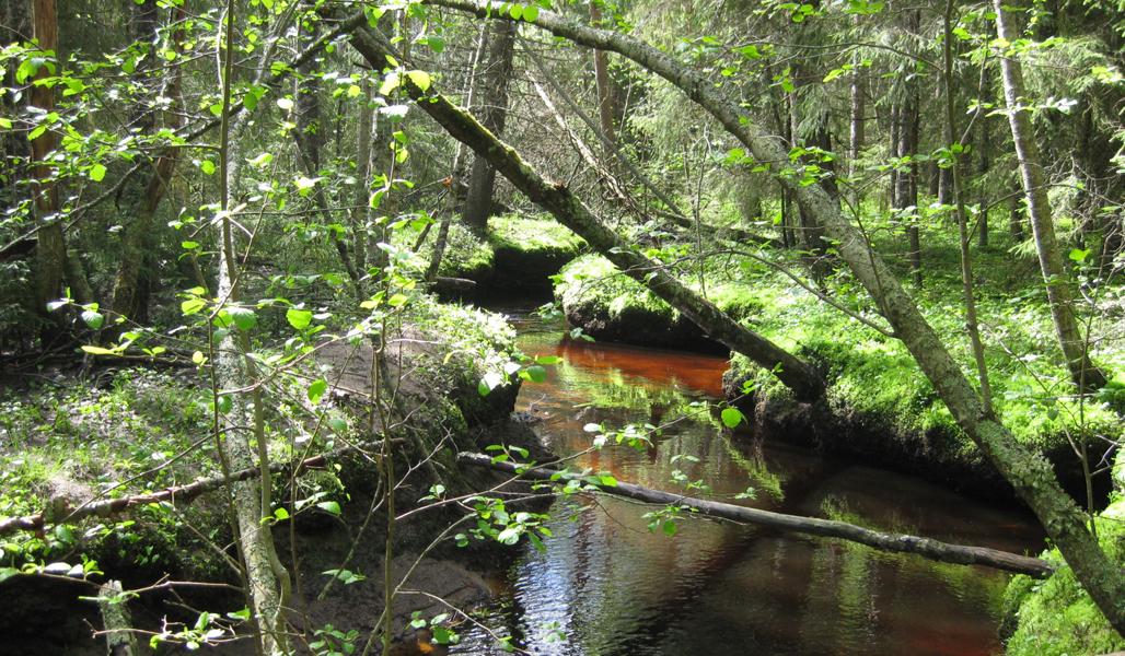 Mutkittelevan puron ympärillä on metsää.