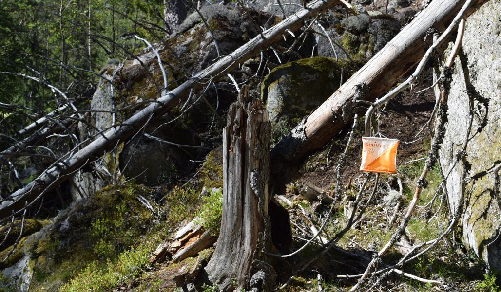 Rastilippu riippuu kaatuneen puun oksassa