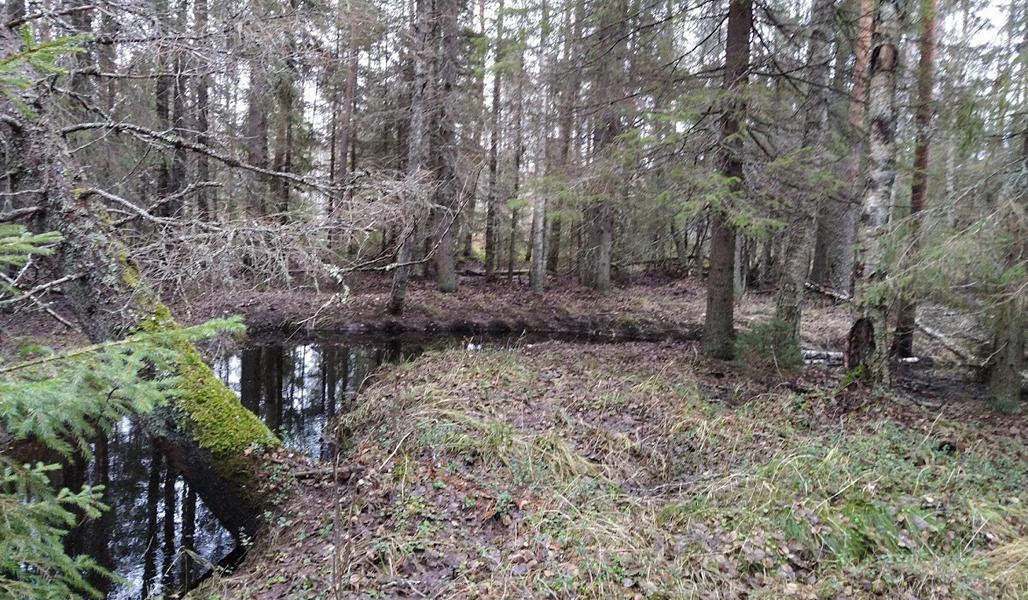 Purouoman ympärillä kasvaa luonnontilaista metsää.