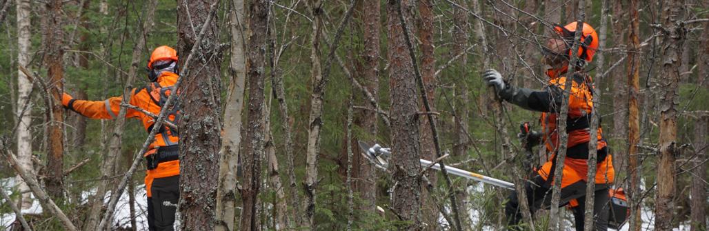 Metsurit Pekka Niskanen ja Janne Iivanainen kulkevat raivaussahojen kanssa tiheässä metsikössä. He ovat tekemässä ennakkoraivausta.